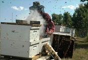 Окуривание пчёл