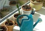 Полив растений в период покоя