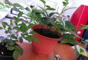 Опознать растение