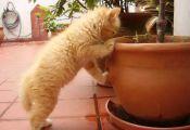 Котёнок и растения
