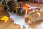 Кошки и ребёнок