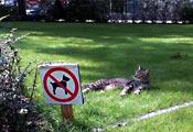 Кот на газоне