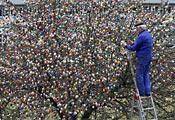 Традиция украшать Пасхальными яйцами деревья