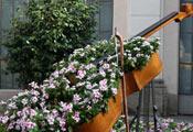Клумба музыкальный инструмент