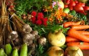 Урожай полученный при органическом земледелии