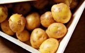 Самый дорогой картофель — La Bonnotte