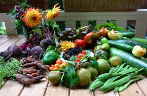 ЭМ-препараты улучшают рост и развитие растений, увеличивают их урожайность