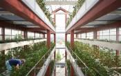 Вертикальная ферма ilimelgo для выращивания овощей в город