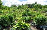 Огород в пермакультуре
