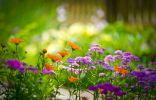 Растения, которые можно посадить на могиле
