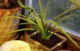 Помогите узнать названия растений