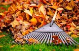 Осенняя листва в саду