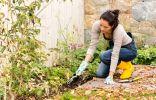 Осенняя подготовка цветника к зиме