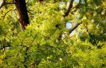 Пожалуйста помогите определить название дерева