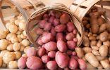 Как хранить картофель?