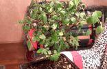 Помогите определить растение и подскажите как за ним ухаживать
