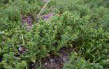 Фотографировала растение на островах Финского залива