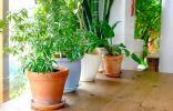 Декоративные растения в интерьере комнаты