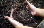 Определение кислотности почвы и её раскисление