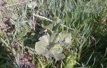 Помогите опознать несколько растений