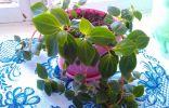 Помогите узнать название комнатного растения