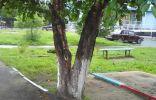 Название дерева