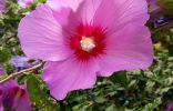 Помогите узнать цветок