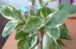 Подскажите пожалуйста, что это за растение