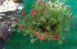 Увидела симпатичный цветок, кто знает его название
