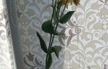 Цветок явно садовый