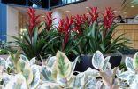 Декоративные растения в холле здания