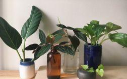 Черенкование комнатных растений