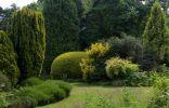 Участок сада с кустарниками, деревьями и хвойными