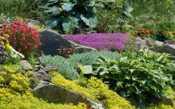 Почвопокровные растения для альпийской горки