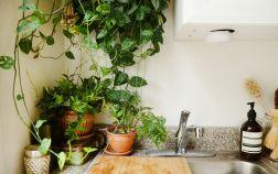 Комнатные растения в маленькой кухне