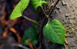 Опознаем растения парка Измайлово