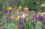 Модная цветовая палитра цветников в сезоне 2018