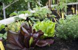 Как биофунгициды защищают растения?