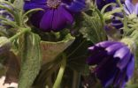 Фиолетовый цветок с желтой сердцевиной