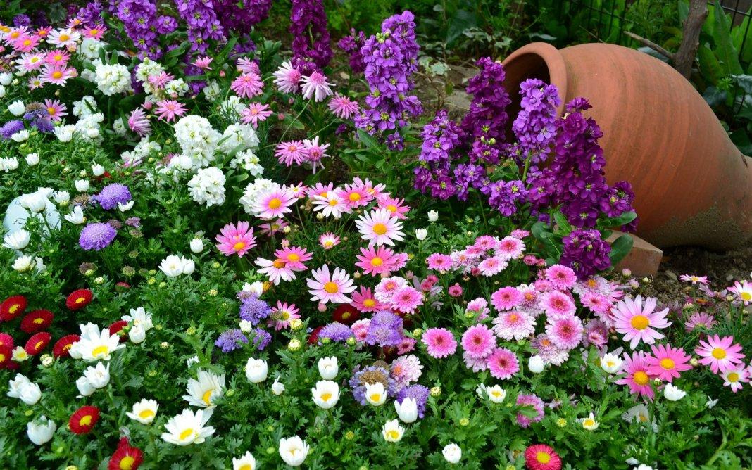 Цветник из однолетних цветов