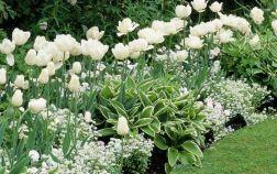 Лучшие растения для «белых» цветников