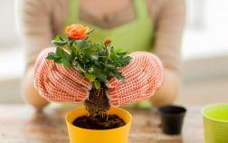 5 лучших садовых растений, которые можно выращивать дома