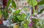 Капризные комнатные растения