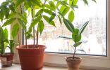 Особенности зимовки комнатных растений