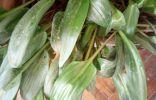 Как узнать название растений по фото?