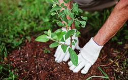 Планировка плодового сада