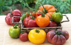 11 интересных сортов томатов