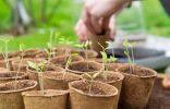 8 важных овощей, выращиваемых рассадой