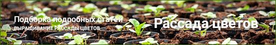 Статьи о выращивании рассады цветов