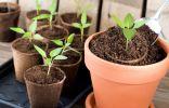 5 эффективных подкормок для рассады
